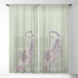 Sphynx kitten Sheer Curtain