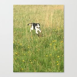Happiness is running wild and free, and not letting your feet touch the ground! Canvas Print