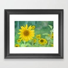 Sunflowers. Vintage dreams Framed Art Print