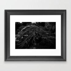 WINTER MAPLE Framed Art Print