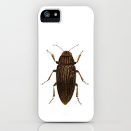 Lithograph of Pine Borer (Chalcophora Mariana) Insect iPhone Case