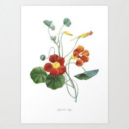Indian cress art of Nature, flower print, botanical illustration Art Print