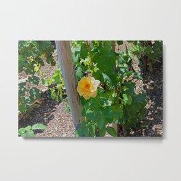 Rose In The Vine Metal Print