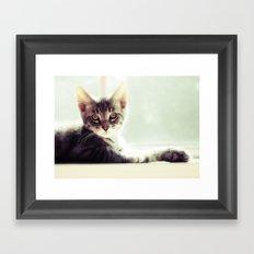 Tabby Kitten in a window Framed Art Print