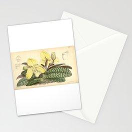 Paphiopedilum concolor (as Cypripedium concolor ) Curtis' 91 (Ser. 3 no. 21) pl. 5513 (1865) Stationery Cards