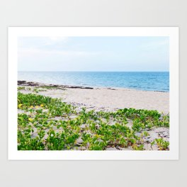 Palm Beach colors Art Print