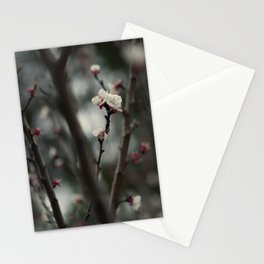 Apricot tree IV Stationery Cards