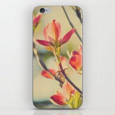 Vintage Red Dogwood Tree Flowers in Spring Warm Sunny Botanical iPhone & iPod Skin