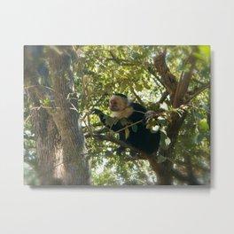 Capuchin Contemplation Metal Print