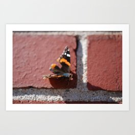 Butterfly :: Brick in the Wall Art Print