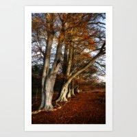 Afternoon light at Hatch Park (Kent, UK) Art Print