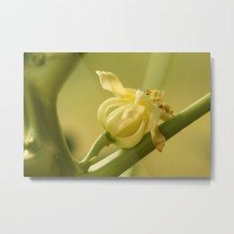 Papaya Tree Flower  Metal Print