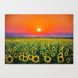 Sunflower Haze Canvas Print