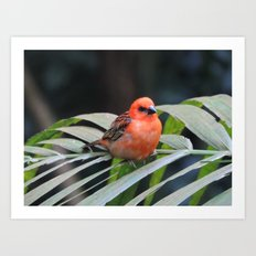 Pretty Little Bird Art Print
