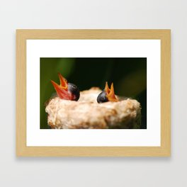 Two Baby Hummingbirds  Framed Art Print