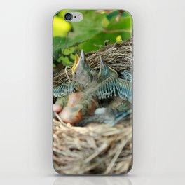 Azores blackbird nest iPhone Skin