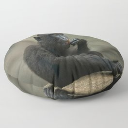 Celebes Crested Macaque Youngster Floor Pillow