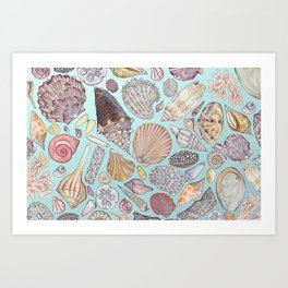 Sanibel Sea Shells Art Print