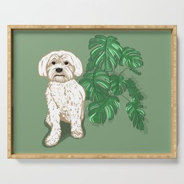 White Havanese dog and Monstera Deliciosa Serving Tray