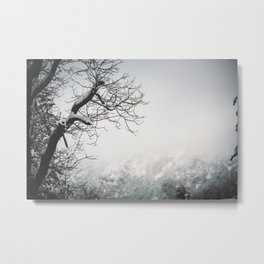 Snowy Branches II Metal Print