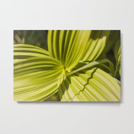 Green Leaf Photography Print Metal Print