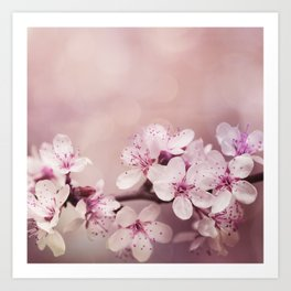 Soft Pink Cherry Blossom Art Print