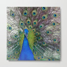Mr. Peacock Metal Print
