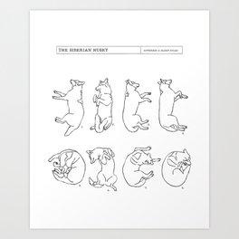 Siberian Husky Sleep Study Art Print. Illustrations of a dog's sleeping postions Art Print