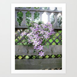 Purple Clematis Flower Vine Basking in Sunlight on a Wooden Garden Arbor Art Print