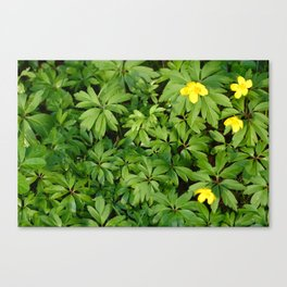 Yellow flowers on Green Canvas Print