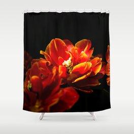 Red tulips dark background Shower Curtain