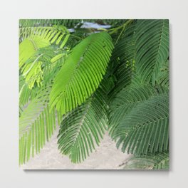 Poinciana Calm Metal Print