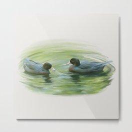 Blue Ducks in pond Metal Print
