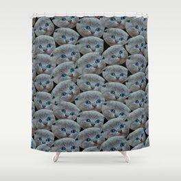 cute collage pattern shorthair grey cat Shower Curtain
