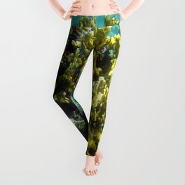 Watercolor Sealife, Fire and Brain Coral 01, St John, USVI, A Feisty and Witty Combination Leggings