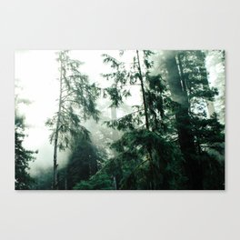 Up In The Woods Canvas Print