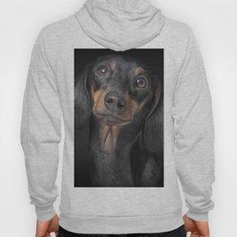Drawing Dog breed dachshund Hoody
