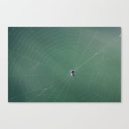 In the spider's net Canvas Print