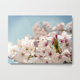 Spring, Flower Photography, Pastel, Pink, Romantic Cherry Blossom, Art Deco - 8 x 10 Wall Decor Metal Print