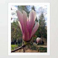 Shy Japanese Tulip Art Print