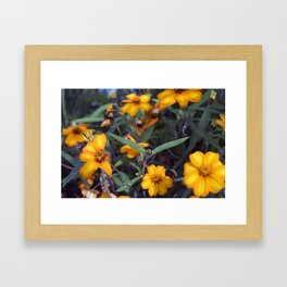 Small Orange Flowers Framed Art Print