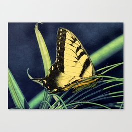 Yellow Tiger Swallowtail Butterfly A125 Canvas Print