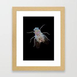 Animal Slang - Fly Framed Art Print