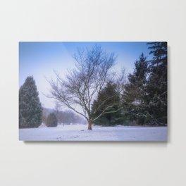 Winter Trees In Cedar Creek Park Metal Print
