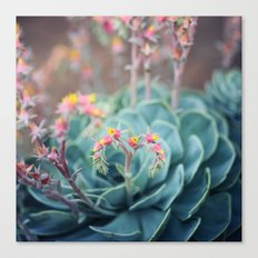 Echeveria #1 Canvas Print