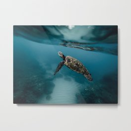 Take a peek Metal Print