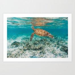 Turtle ii Art Print