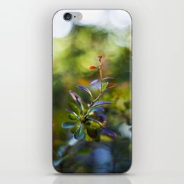 Barberry Color iPhone Skin