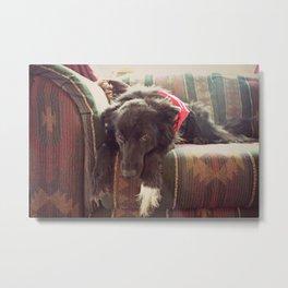 Sad Puppy Dog Metal Print