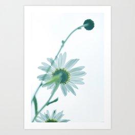 Green Daisies - Take 1 Art Print